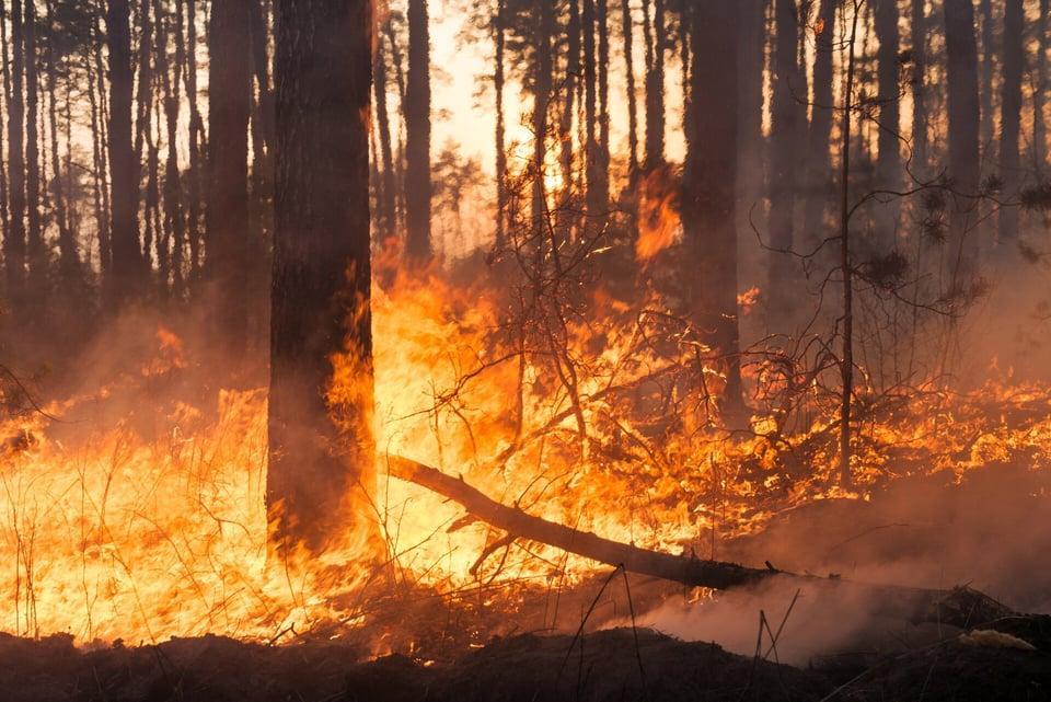 California-Wildfire-Blog